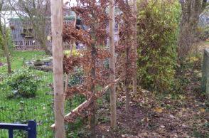 création-plantations d'arbres palissés-arbustres-plantation-plantes-vertdegris-4