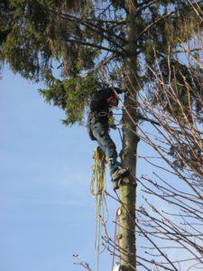 élagage-abattage dangereux-arbre-démontage arbre-18