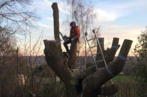 élagage-abattage dangereux-arbre-démontage arbre-1